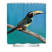 Green Aracari On Branch Shower Curtain