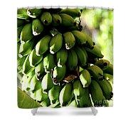 Green Bananas Shower Curtain