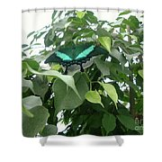 Green Banded Butterfly Shower Curtain