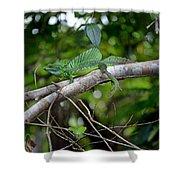 Green Basilisk Lizard Shower Curtain