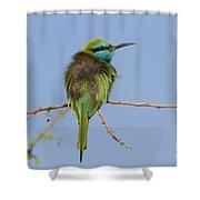 Green Bee-eater Merops Orientalis Shower Curtain