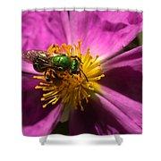 Green Bee Feeding On Rock Rose Shower Curtain