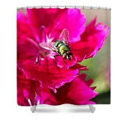 Green Bottle Fly On Dianthus  Shower Curtain