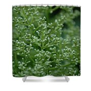 Green Bulbs By Jammer Shower Curtain