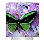 Green Butterfly And Mums Shower Curtain