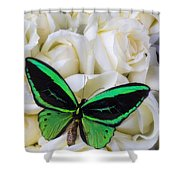 Green Butterfly With White Roses Shower Curtain