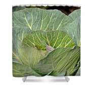 Green Cabbage Shower Curtain