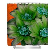 Green Cactus Flowers Shower Curtain