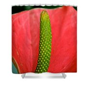 Green Candle Shower Curtain