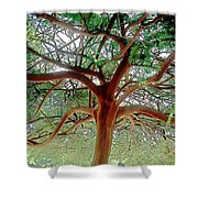 Green Canopy Shower Curtain by Terry Reynoldson