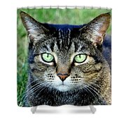 Green Cat Eyes In Summer Grass Shower Curtain