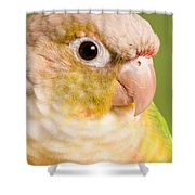 Green-cheeked Conure Pineapple P Shower Curtain