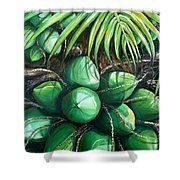 Green Coconuts  3  Sold Shower Curtain