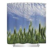 Green Crops Northwest Of Edmonton Shower Curtain
