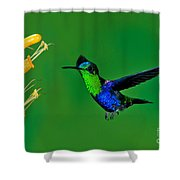 Green-crowned Woodnymph Shower Curtain
