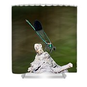 Green Damselfly  Shower Curtain