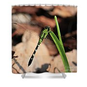 Green Dragonfly On Grass Square Shower Curtain