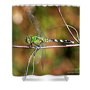 Green Dragonfly On Twig Square Shower Curtain