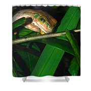 Green Eye'd Frog Shower Curtain