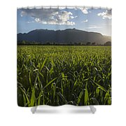 Green Field In Sunset Shower Curtain