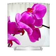 Green Field Sweetheart Orchid No 1 Shower Curtain
