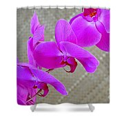 Green Field Sweetheart Orchid No 3 Shower Curtain