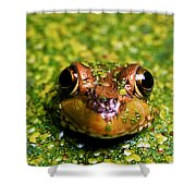 Green Frog Hiding Shower Curtain