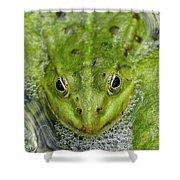 Green Frog Shower Curtain by Matthias Hauser