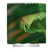 Green Frond  Abstract Shower Curtain