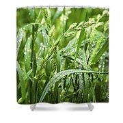 Green Grass After Rain Shower Curtain