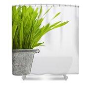 Green Grass In A Pot Shower Curtain