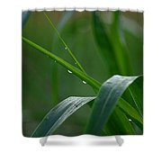 Green Grass Of Summer Shower Curtain