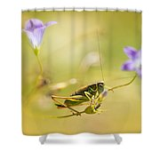 Green Grasshopper On Violet Bell Flowers Shower Curtain