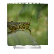 Green Grasshopper You Looking At Me Shower Curtain