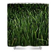 Green Green Grass ... Shower Curtain