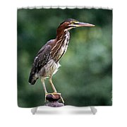 Green Heron 2 Shower Curtain