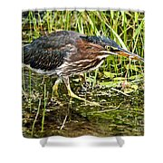 Green Heron And Catch Shower Curtain