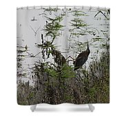 Green Heron At The Pond Shower Curtain
