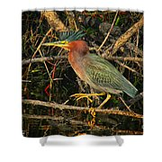 Green Heron Basking In Sunlight Shower Curtain