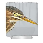 Green Heron Close-up Shower Curtain