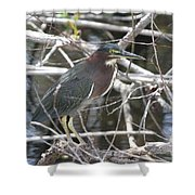 Green Heron In Everglades Np Shower Curtain