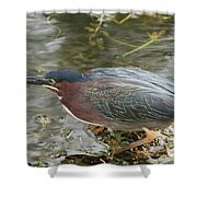 Green Heron On The Lookout Shower Curtain