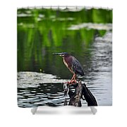Green Heron Perch Shower Curtain