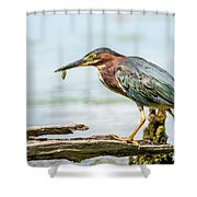 Green Heron Perfection Shower Curtain