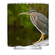 Green Heron Pictures 378 Shower Curtain