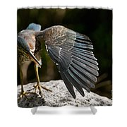 Green Heron Pictures 382 Shower Curtain