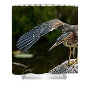 Green Heron Pictures 386 Shower Curtain