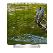 Green Heron Pictures 414 Shower Curtain