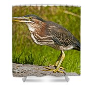 Green Heron Pictures 449 Shower Curtain
