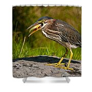 Green Heron Pictures 457 Shower Curtain